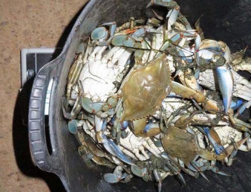 ATENCIÓ: Cop contra la pesca fraudulenta en 4 operacions al Delta de l'Ebre!