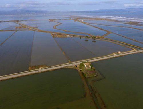 Els regants garantiran el subministrament d'aigua dolça per rentar els arrossars inundats pel temporal
